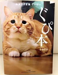 インスタで人気のぽっちゃり猫「ぐっぴー」の紹介
